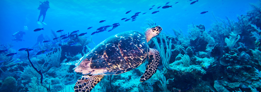 Divers Package | Ocean Island Travel & Tour